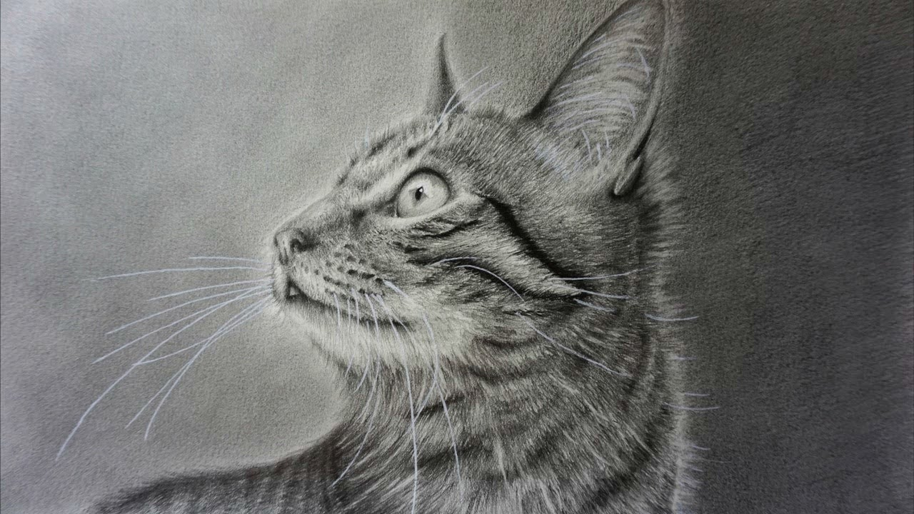 how to draw a realistic cat with pencil step by step youtube