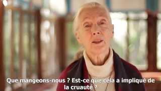 Question / réponse à Jane Goodall : Que pouvons-nous faire pour un monde meilleur ?