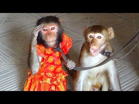 Monkey Drama || Funniest Monkey Drama Show On The Street Side Parking |