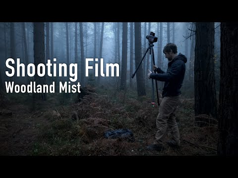 Landscape Photography on Film | Woodland Mist Portra 400