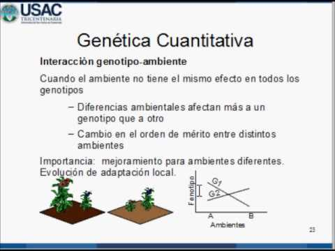 Interacción genotipo ambiente