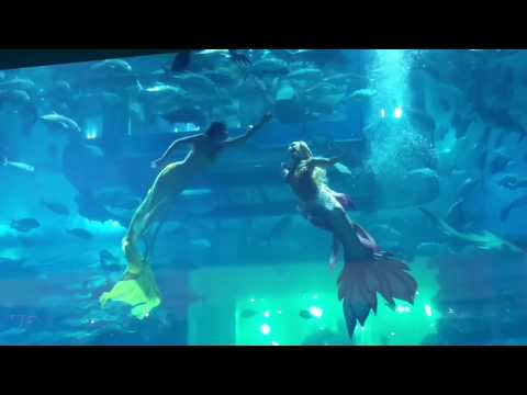 Mermaid show-Dubai Mall Aquarium