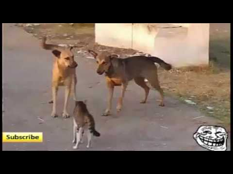 Funny Cats and Dogs Compilation (who are the winner)