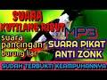 Suara Pikat Kutilang Ribut  Mp3 - Mp4 Download
