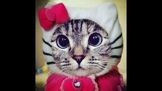 Лучшие приколы про котиков | Подборка самых смешных кошек и котят #10