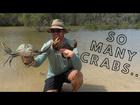 The BIGGEST CATCH Of MUD CRABS I've Had In A Single Hunt!