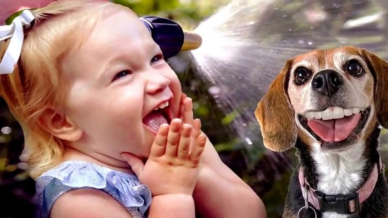 ютуб смешные животные последние прочие болезни, являющиеся