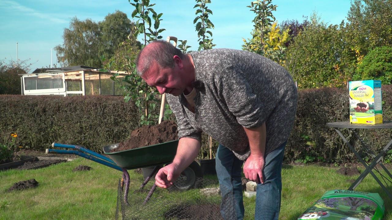 kirschbaum pflanzen kern