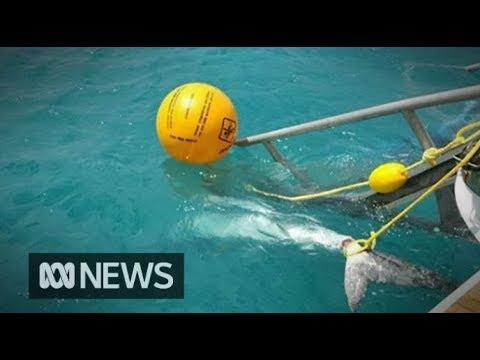 Sharks killed after attacks in north Queensland