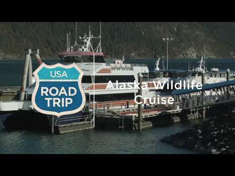 Alaska Road Trip — Wildlife Cruise