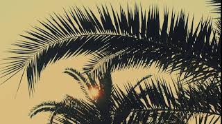 Palm leaves swaying in the sun. Free stock video. Full HD footage Free. Rec.709 1080p 60fps #18