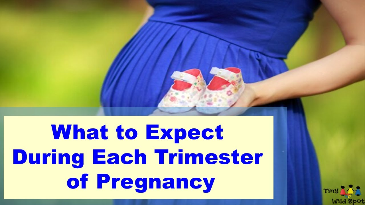 What to Expect During Each Trimester of Pregnancy - YouTube