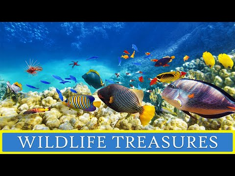 Must See Places of the World Episode 3: Wildlife Treasures