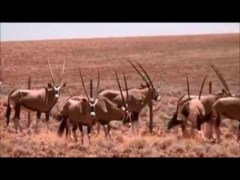 As the deer - Keith Johnson: Out of Africa - Up, close and personal