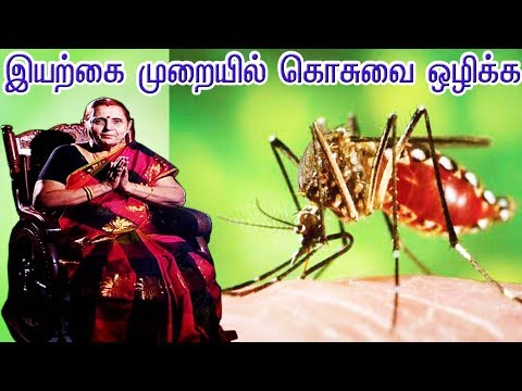 Paati Vaithiyam | Engeyum Samayal | Captain Tv | | 28.02.2019 | #captaintv #mosquito #natural   Like: https://www.facebook.com/CaptainTelevision/ Follow: https://twitter.com/captainnewstv Web:  http://www.captainmedia.in  About Captain TV  Captain TV, a standalone Tamil General Entertainment Satellite Television Channel was launched on April 14 2010. Equipped with latest technical Infrastructure to reach the Global Tamil Population A complete entertainment and current affairs channel which emphasison • Social Awareness • Uplifting of Youth • Women development Socially and Economically • Enlighten the social causes and effects and cover all other public views  Our vision is to be recognized as the world's leading Tamil Entrainment, News  and Current Affairs media network most trusted, reaching people without any barriers.  Our mission is to deliver informative, educative and entertainment content to the world Tamil populations which inspires people through Engaging talented, creative and spirited people. Reaching deeper, broader and closer with our content, platforms and interactions. Rebalancing Tamil Media by representing the diversity and humanity of the world. Being a hope to the voiceless. Achieving outstanding results efficiently.