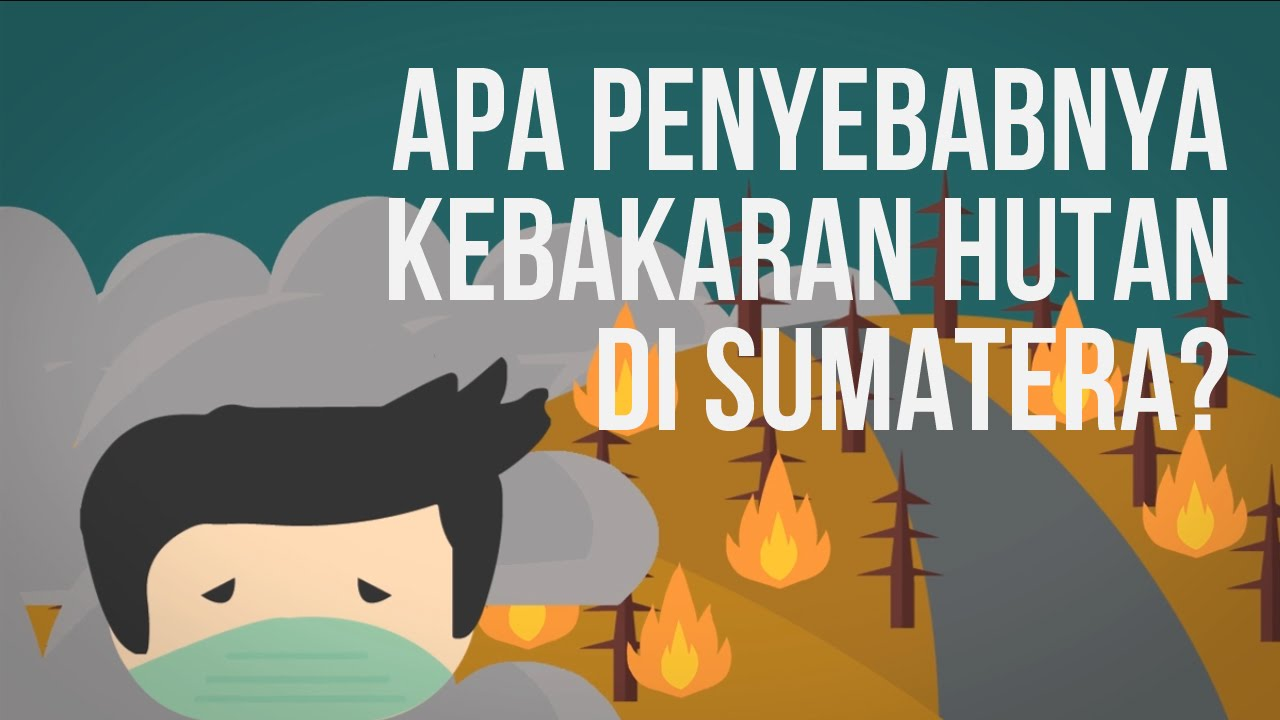 Apa Penyebab Kebakaran Hutan di Sumatera? #MelawanAsap