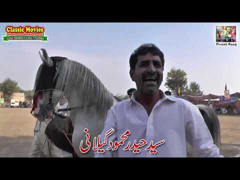 Horse Name Maharaja / Mela Munny Wala 96-DPakistan / Best Horse Dance Punjab Pakistan/17 video download