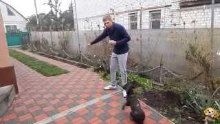 Учим собаку апортировке - День 5 (Подача по команде)