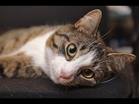 ❤️ Celebrate  International Cat Day,  8. August 2019  ❤️  My Cat Wilma  ❤️ Weltkatzentag