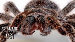 Die 10 größten Spinnen [ALT]