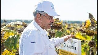 Критерії вибору гібридів соняшнику для підвищення прибутковості вирощування,«Грига»,Полтавська обл.