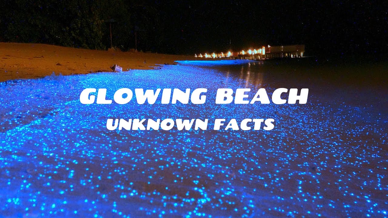 Glowing beachvaadhoo island some unknown facts you should know glowing beachvaadhoo island some unknown facts you should know2017 publicscrutiny Gallery