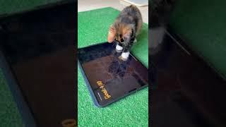 КОТЁНОК ИГРАЕТ СМЕШНОЕ И ЗАБАВНОЕ ВИДЕО С КОТЁНКОМ ПРИКОЛЫ С ЖИВОТНЫМИ КОТИКИ ПРИКОЛЫ 2021 CATS