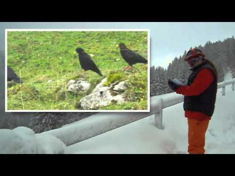 Swiss Alps Climate Change küresel ısınma