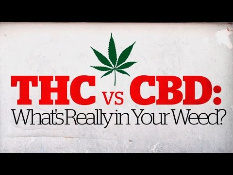 THC vs CBD: What's really in your weed? (CBC Marketplace)