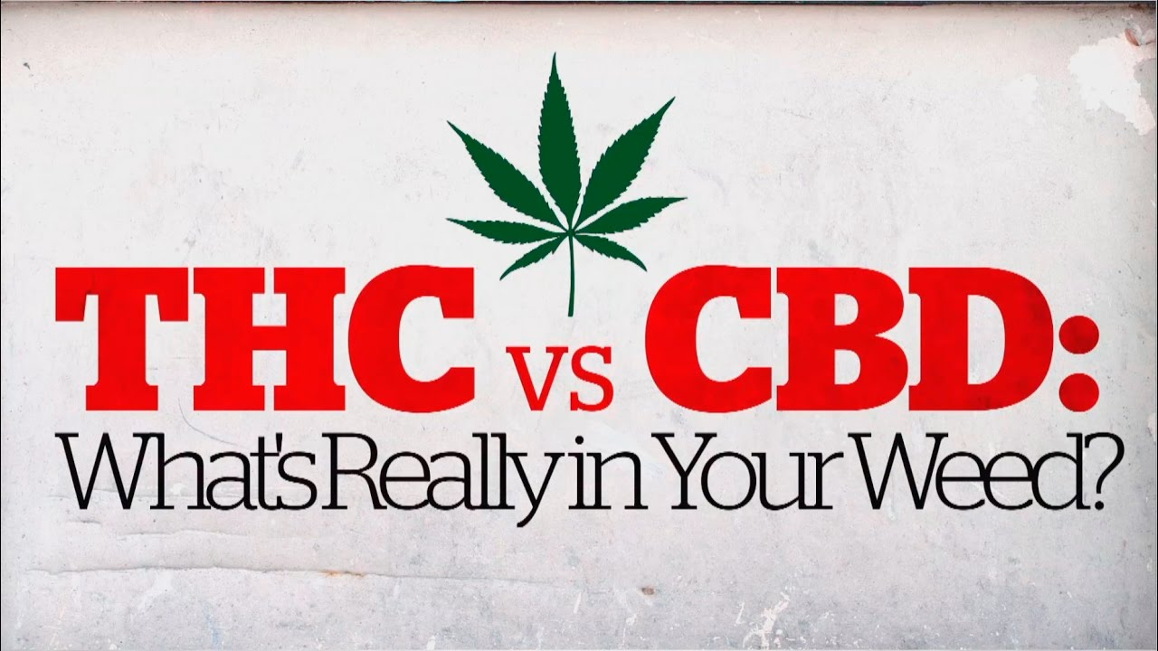 6 Simple Techniques For Cbd Vs. Thc: The Differences – Observer,What Does Cbd Or Thc? Common Drug Test Can't Tell The Difference … Do?