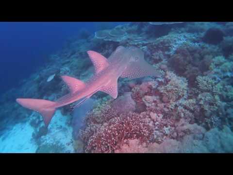 Best of Tubataha Reefs  AprilMayJune 2016