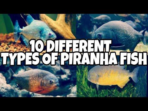 Piranha Fish Types