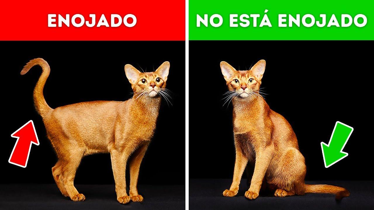 """Cómo Los Gatos Dicen """"Te quiero"""""""
