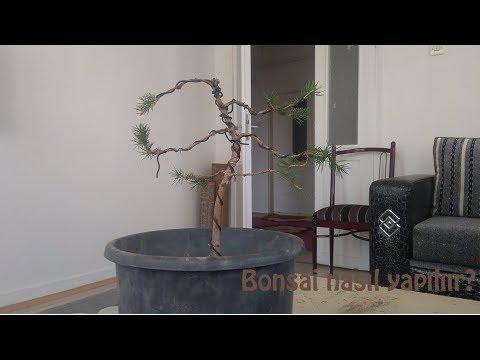 Minyatür Ağaç (Bonsai) Nasıl Yapılır ? -Yeni Başlayanlar İçin-