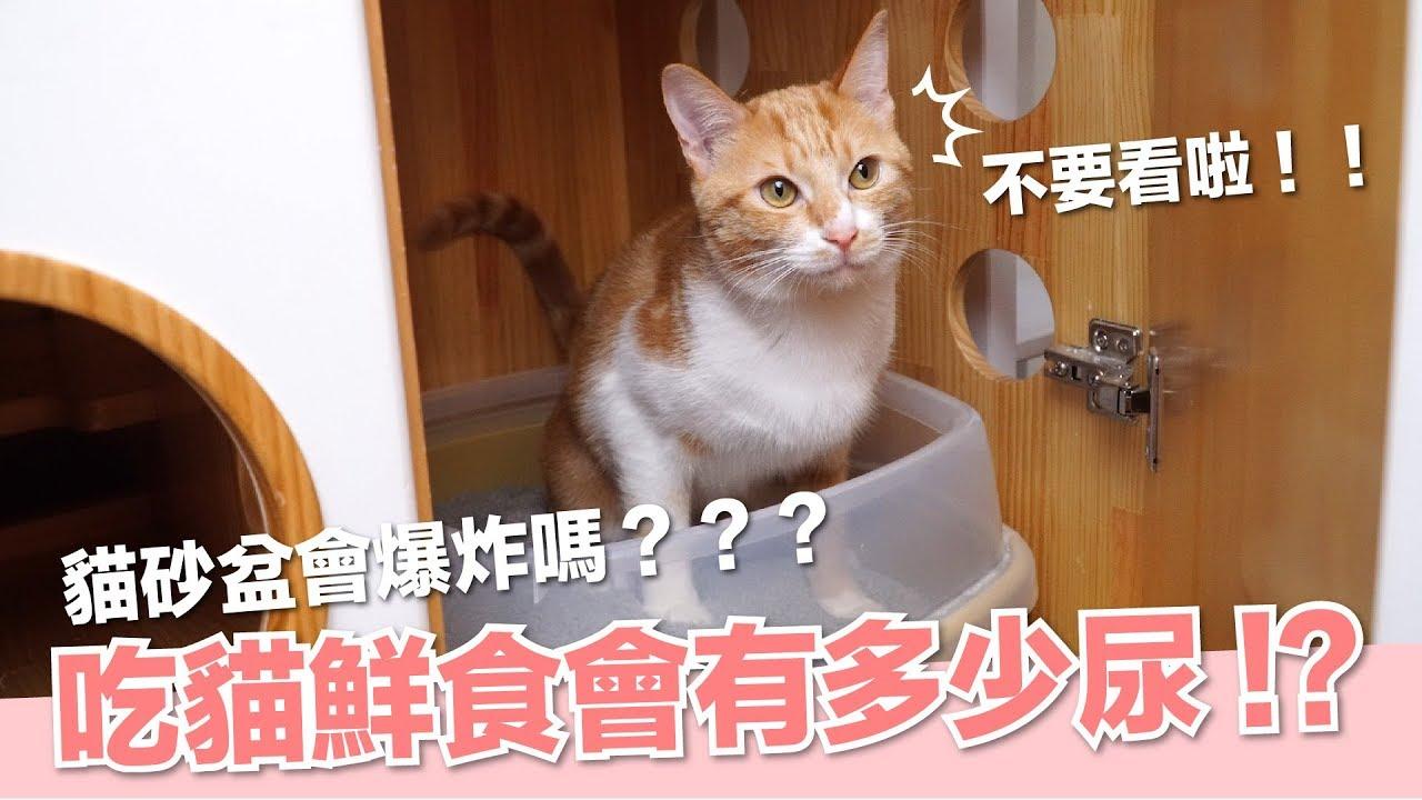 吃鮮食會貓尿爆炸!全鮮食的貓一天會有多少貓砂球?【好味貓日常】EP44 - YouTube