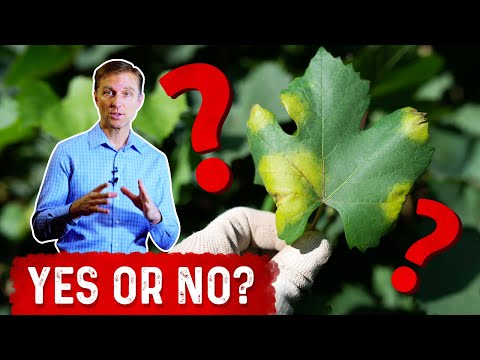 Can Plants Get Cancer?