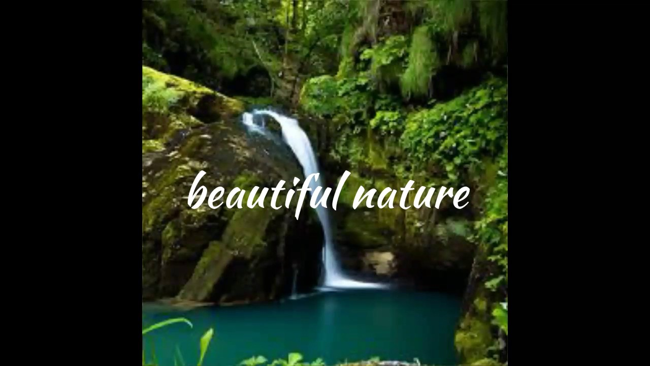 Saving Nature Stock Footage Video - Shutterstock
