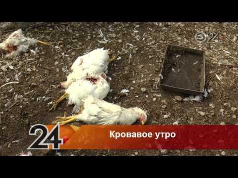 В Казани появилось неизвестное существо, пьющее кровь птиц