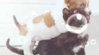 Няшные щеночки и котики! :)
