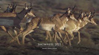 Showreel 2021 - Miguel Ángel Sicilia