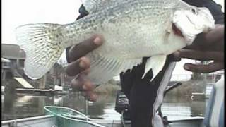 CALIFORNIA DELTA CRAPPIES-FISHING WITH RIPPN LIPPS