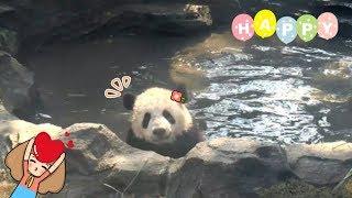 When Baby Panda Meets VIP Bathhouse~ Strolling, Swimming, So Fancy! | iPanda