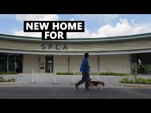 SPCA's New Home | CNA Insider