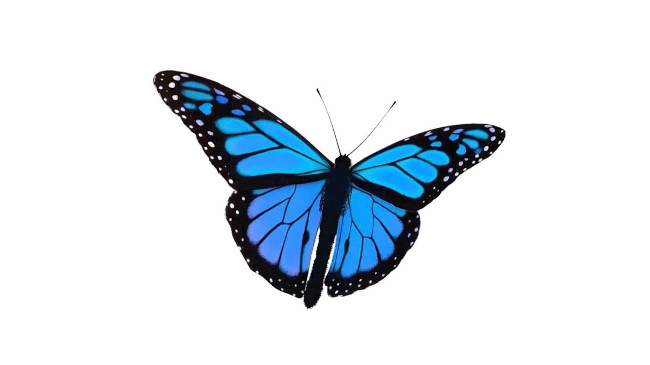 GLAR - ไปดูผีเสื้อที่ห้องกันไหม (Butterfly) (Official Lyrics Video)
