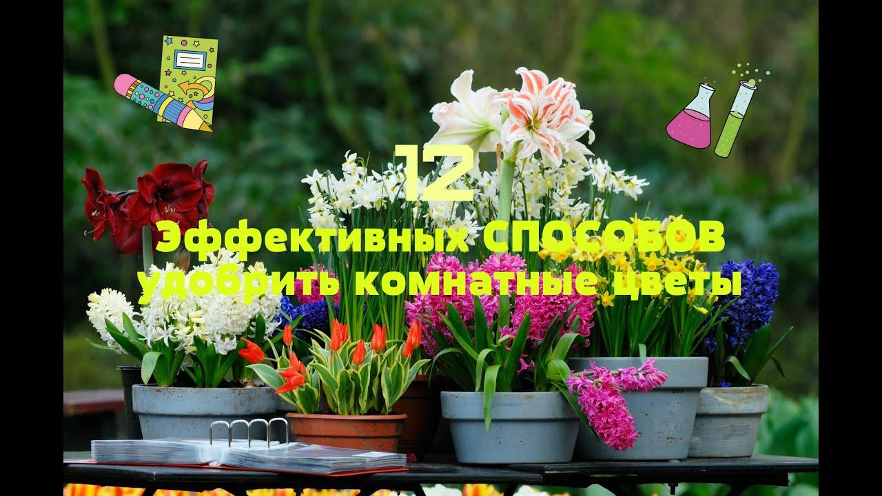 Как реанимировать цветы комнатные