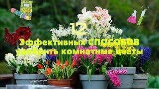 УДОБРЯЕМ Комнатные Растения Дешево! 12 ВИДОВ Отходов!(В этом видео покажу вам, как из отходов можно сделать удобрения для комнатных растений, все очень просто,..., 2015-07-16T19:09:51.000Z)