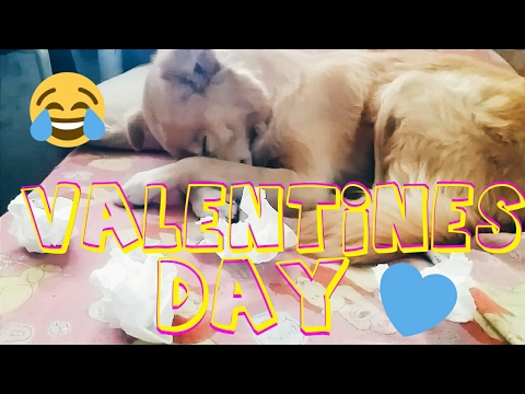 dogs-on-valentine's-day