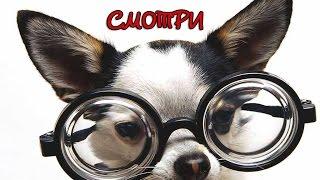 Смешное видео про собак. Funny dogs. Смешные ролики о собаках 2015 New