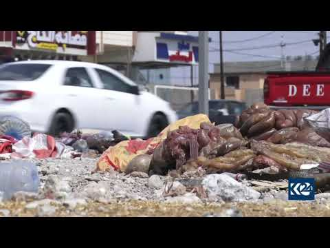 Rotting animal remains litter streets of Kirkuk after Eid holiday