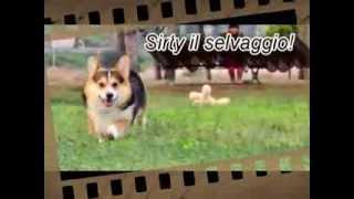 "Franco Pinna ""sirty Il Selvaggo"" The Movie"